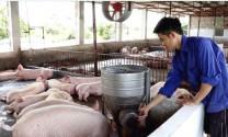 Huyện Mỹ Đức: Nan giải bài toán môi trường chăn nuôi
