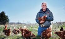 Nuôi gà đẻ trứng theo phương pháp nhân đạo