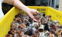 THÔNG CÁO BÁO CHÍ: Hội thảo Phát triển Chăn nuôi gia cầm bền vững