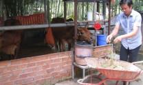 Cỏ nuôi bò, phân bò nuôi trùn, trùn nuôi gà, thu 300 triệu/tháng