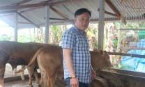 Người tiên phong khởi nghiệp nuôi bò Charolais thành công