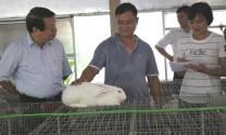 Bắc Giang: Hợp tác chăn nuôi thỏ cho thu nhập ổn định