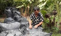 Vĩnh Long: Nhân rộng mô hình ủ rơm với urê trong chăn nuôi