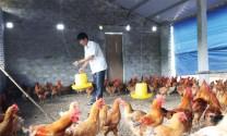 Chính sách khuyến khích phát triển hợp tác, liên kết trong sản xuất và tiêu thụ sản phẩm nông nghiệp