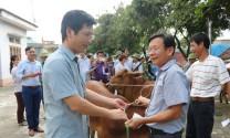 Mô hình nuôi bò sinh sản: Thêm sinh kế thoát nghèo