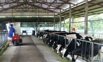 """Nông dân muốn """"chia tay"""" với bò sữa"""