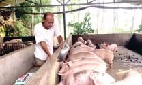 Tuyên Quang: Tìm giải pháp cho nguồn thực phẩm sạch
