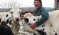 Nông dân Mỹ sẽ đổ sữa ra đồng?