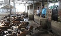 Thu lãi 300 triệu đồng từ nuôi la liệt ba ba, rùa câm, lợn rừng