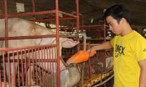Sẽ siết chặt các quy chuẩn trong chăn nuôi