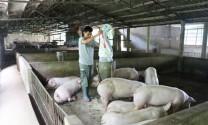 Thanh Hóa: Khó khăn trong phát triển trang trại chăn nuôi quy mô lớn