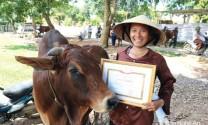 Nghệ An: Hội thi bò béo, bò đẹp
