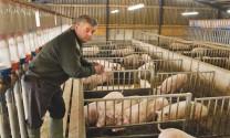 Đức cứu vãn ngành heo đang lao dốc