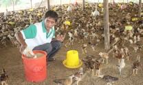 Đồng Nai: Tổng đàn gà tăng trưởng 'nóng'