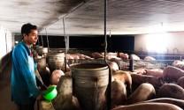 Mô hình chăn nuôi trong chuồng lạnh: Hiệu quả kinh tế cao, bảo đảm vệ sinh môi trường