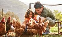 Phúc lợi động vật: Từ luật đến thực tiễn