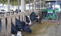 Tập đoàn TH: Từ đàn bò gen A2A2 đến dòng sữa A2 đẳng cấp