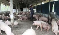 Hãy công bằng với người chăn nuôi