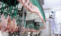Chăn nuôi theo chuỗi: Giảm rủi ro, thuận đầu ra
