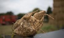 Đức : Cảnh báo độc tố nấm mốc Zearalenone trong củ cải đường