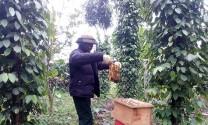 Quảng Bình: Nông dân Bố Trạch phát triển nghề nuôi ong lấy mật