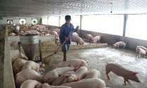 Cải thiện năng lượng cho trang trại