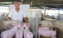Triển khai thí điểm phần mềm quản lý chăn nuôi