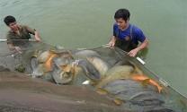 Tăng cường phát triển chăn nuôi và an toàn thực phẩm thủy sản