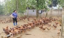 Bước chuyển của ngành chăn nuôi Lào Cai