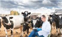 Vaccine thế hệ mới, tương lai của ngành thú y