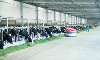 Hệ thống trang trại và liên kết nông hộ cung ứng cho Vinamilk gần 1000 tấn sữa tươi nguyên liệu/ngày