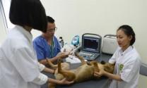 Kỳ vọng bệnh viện thú y