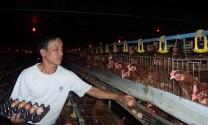 Nguy cơ thiếu hụt thịt lợn vào cuối năm