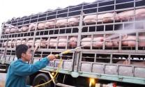 Dịch tả lợn châu Phi Nam tiến, xuất hiện ở Đồng Nai