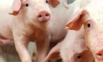 Nghiên cứu về vệ sinh thức ăn và virus