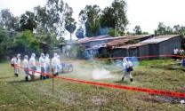An Giang diễn tập ứng phó khẩn cấp với dịch tả heo châu Phi