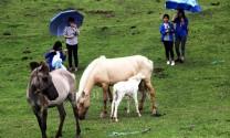 Lạng Sơn: Xây dựng nhãn hiệu tập thể: Nâng cao giá trị sản phẩm ngựa bạch