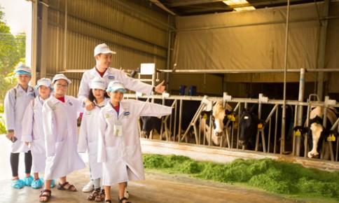 Nghìn cô bò hạnh phúc hôm nay, triệu ly sữa học đường tươi ngon ngày mai
