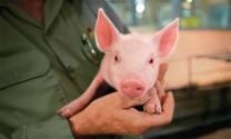 An toàn sinh học là đề phòng kháng kháng sinh