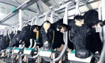 Nỗ lực phát triển ngành chăn nuôi bò sữa công nghệ cao