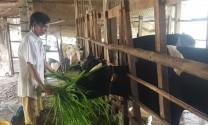 Biến chất thải chăn nuôi thành phân hữu cơ thân thiện môi trường