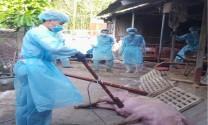 TP. HCM sớm có chính sách hỗ trợ hộ chăn nuôi bị dịch