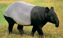 Top 5 loài lợn kỳ lạ nhất thế giới