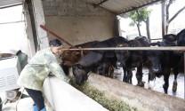 Chăn nuôi an toàn sinh học là giải pháp tối ưu
