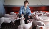 Dịch tả lợn hoành hành ở Trung Quốc, thị trường chăn nuôi heo châu Âu trúng đậm