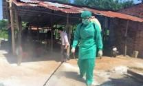 Tây Ninh: Phát hiện ổ dịch tả heo châu Phi đầu tiên