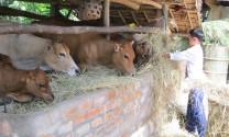 Phú Yên: Chuyển đổi đối tượng nuôi để chống dịch