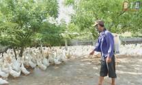 Thái Thụy (Thái Bình): Ngăn chặn dịch cúm gia cầm A/H5N6 lây lan ra diện rộng