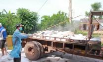 Xuất hiện thêm 1 ổ dịch tả lợn châu Phi ở Đắk Lắk