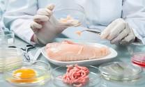 Các tế bào gà được chỉnh sửa gen chống lại virus cúm gia cầm
